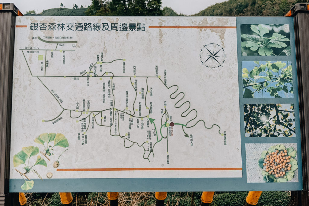 銀杏森林の看板